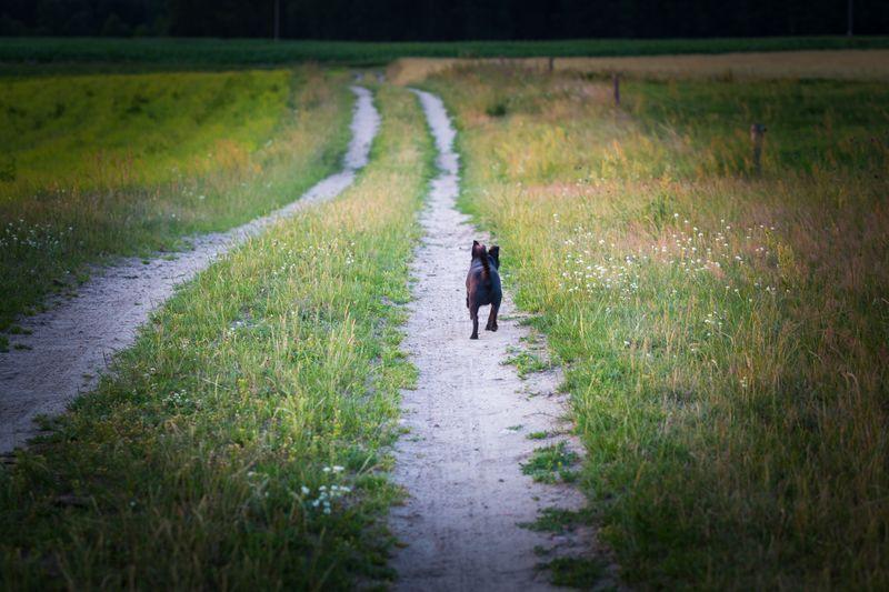 Small black mongrel dog