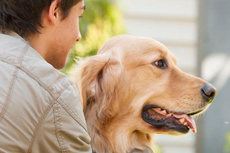 Tierkommunikation für Hunde