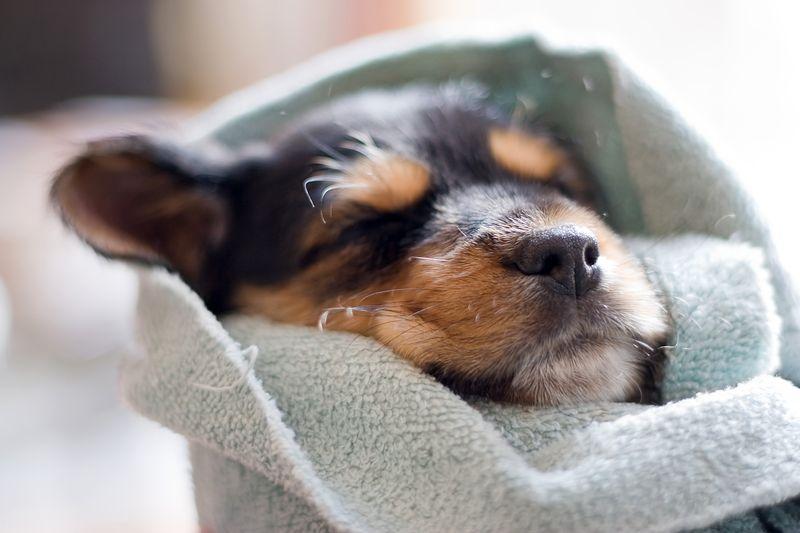 Krankheiten beim Hund